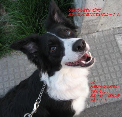 Img_38711_7